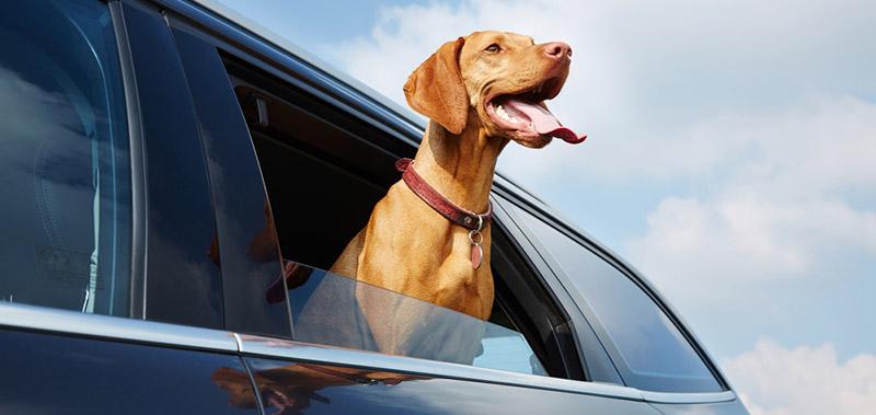 Prevent Summer Heat Stroke in Your Car