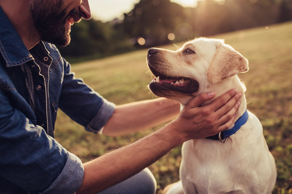 Dogs And Insurance: How Do They Affect Your Policy?