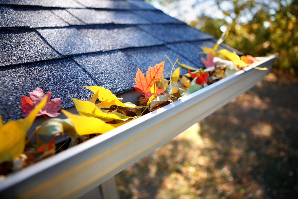 Fall leaves in a roof rain gutter