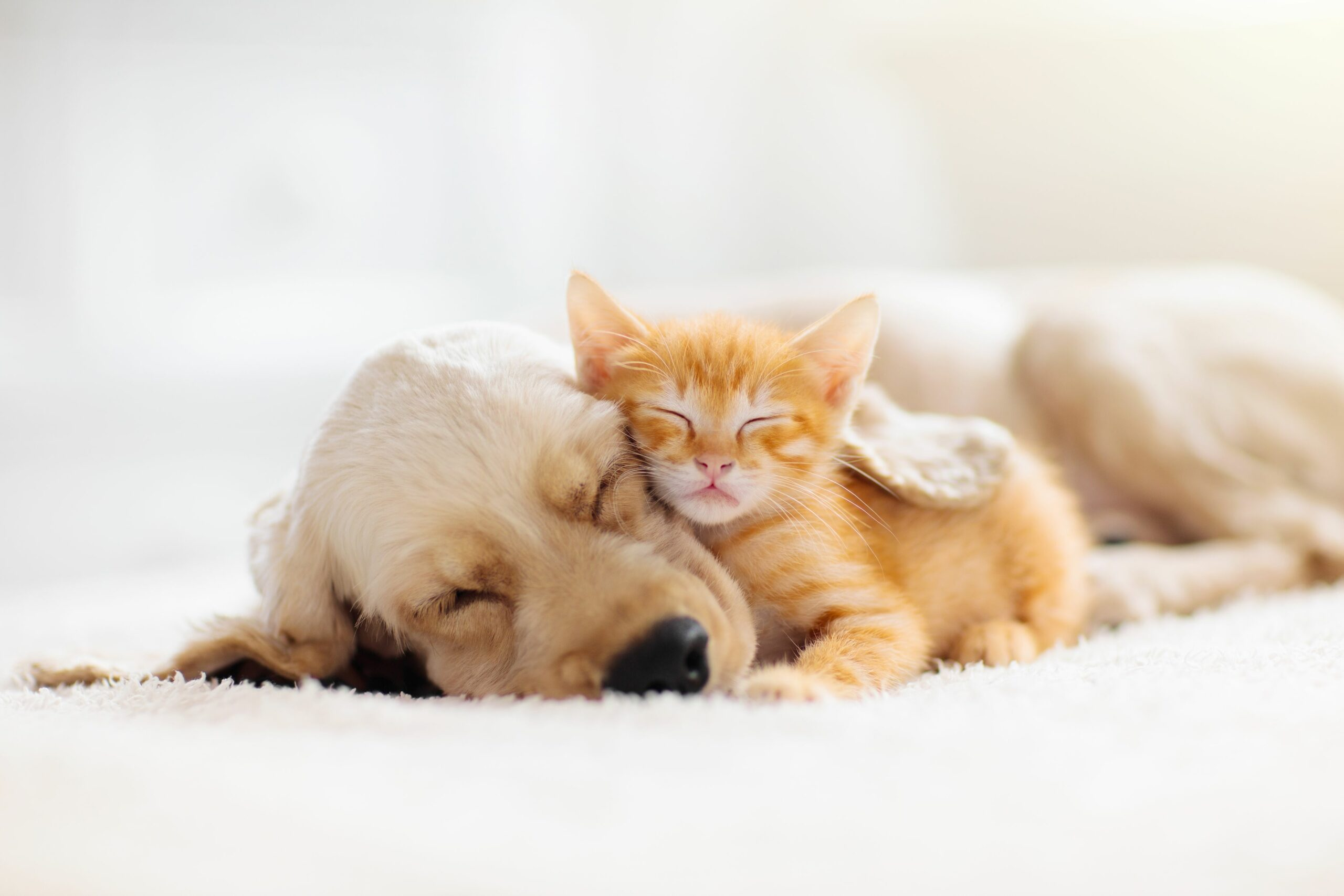 Should You Consider Pet Insurance for Your Dog or Cat?
